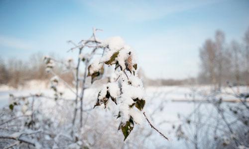 Vinter i Skåne